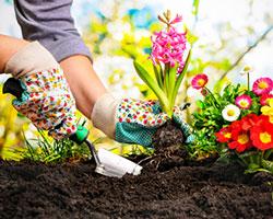 Ein Beet wird mit Frühlingsblumen bepflanzt.