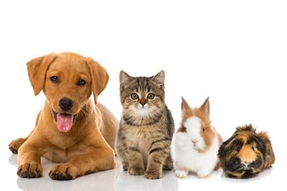 Kosten Fur Haustiere In Der Steuererklarung